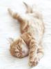 Bodenschutzmatte Katzenbaby 120cm x 90cm