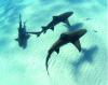 Bodenschutzmatte Haie 120cm x 90cm