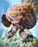 Bodenschutzmatte Schildkröte 120cm x 90cm